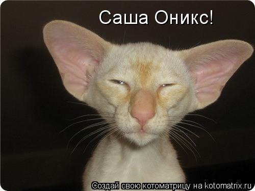 Котоматрица: Саша Оникс!