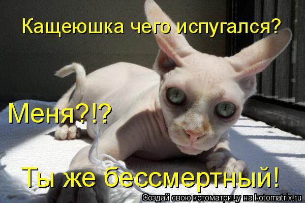 Котоматрица: Кащеюшка чего испугался?  Меня?!? Ты же бессмертный!