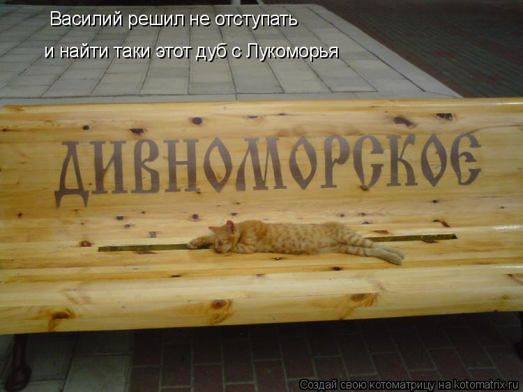 Котоматрица: Василий решил не отступать  и найти таки этот дуб с Лукоморья