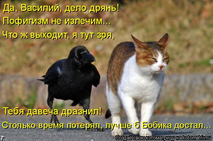 Котоматрица: Да, Василий, дело дрянь! Пофигизм не излечим... Что ж выходит, я тут зря, Тебя давеча дразнил! Столько время потерял, лучше б Бобика достал...