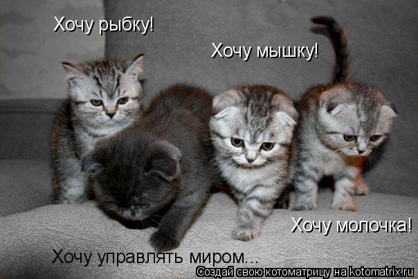 Котоматрица: Хочу рыбку! Хочу мышку! Хочу молочка! Хочу управлять миром...