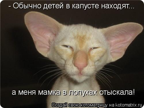 Котоматриця!)))) - Страница 9 1046899