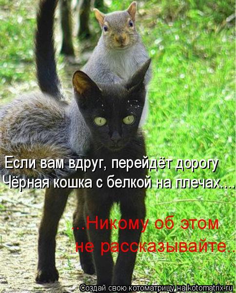 Котоматрица - Если вам вдруг, перейдёт дорогу Чёрная кошка с белкой на плечах..... .