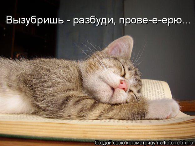 Котоматрица: Вызубришь - разбуди, прове-е-ерю...