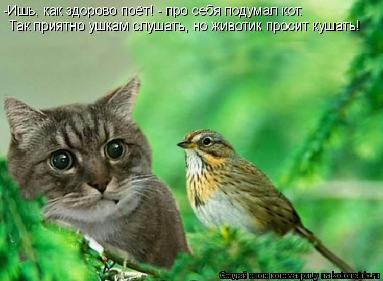 Котоматрица: -Ишь, как здорово поёт! - про себя подумал кот. Так приятно ушкам слушать, но животик просит кушать!