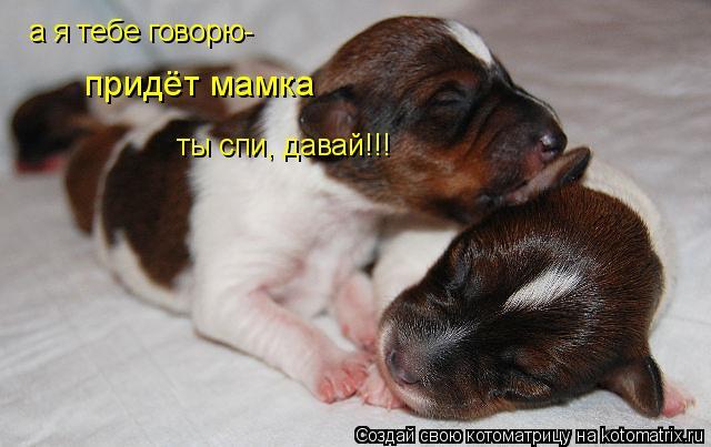 Котоматрица: а я тебе говорю- придёт мамка ты спи, давай!!!