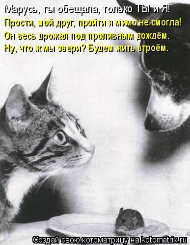 Котоматрица: Марусь, ты обещала, только ТЫ и Я! Прости, мой друг, пройти я мимо не смогла! Он весь дрожал под проливным дождём. Ну, что ж мы звери? Будем жить