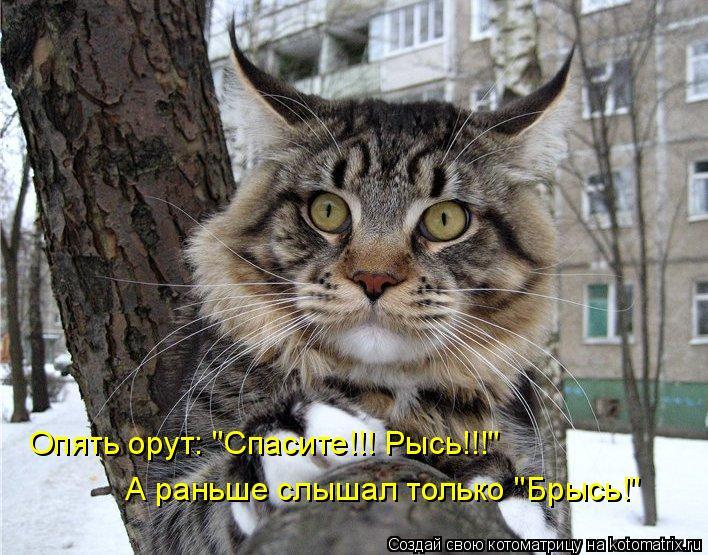"Котоматрица: Опять орут: ""Спасите!!! Рысь!!!"" А раньше слышал только ""Брысь!"""