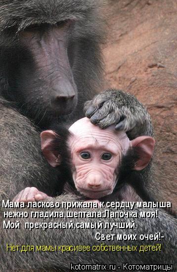 Котоматрица: Мама ласково прижала к сердцу малыша нежно гладила,шептала:Лапочка моя! Мой  прекрасный,самый лучший, Свет моих очей!- Нет для мамы красивее