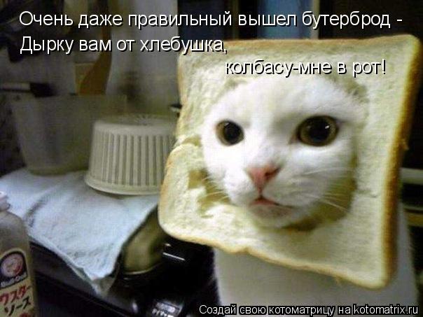 Котоматрица: Очень даже правильный вышел бутерброд - Дырку вам от хлебушка, колбасу-мне в рот!