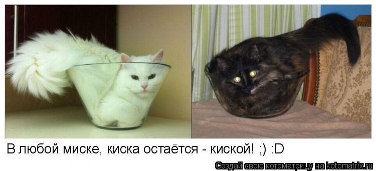 Котоматрица: В любой миске, киска остаётся - киской! ;) :D