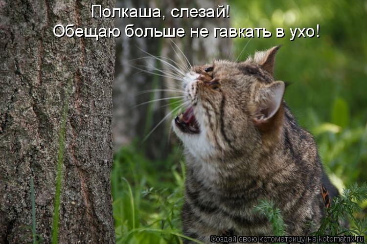 http://kotomatrix.ru/images/lolz/2011/11/27/1048471.jpg