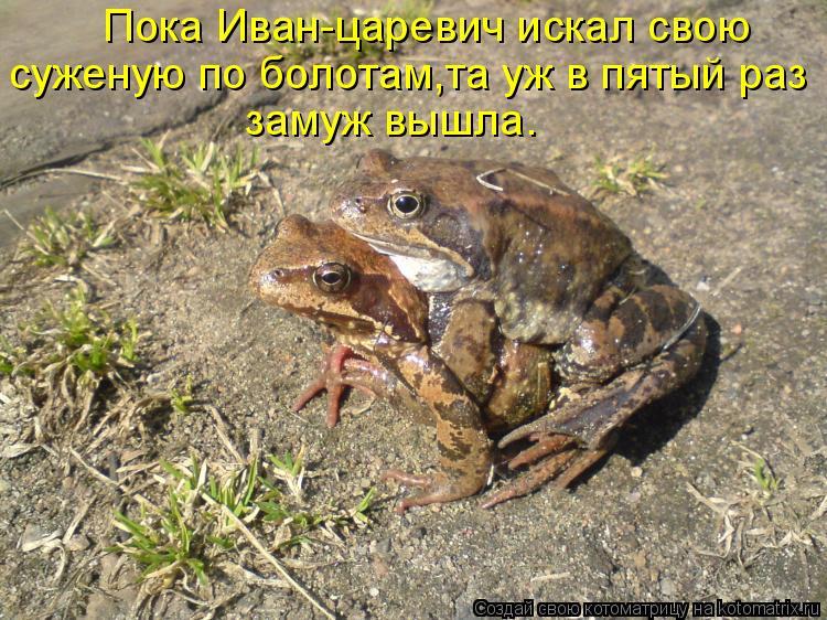 Котоматрица: Пока Иван-царевич искал свою суженую по болотам,та уж в пятый раз замуж вышла.
