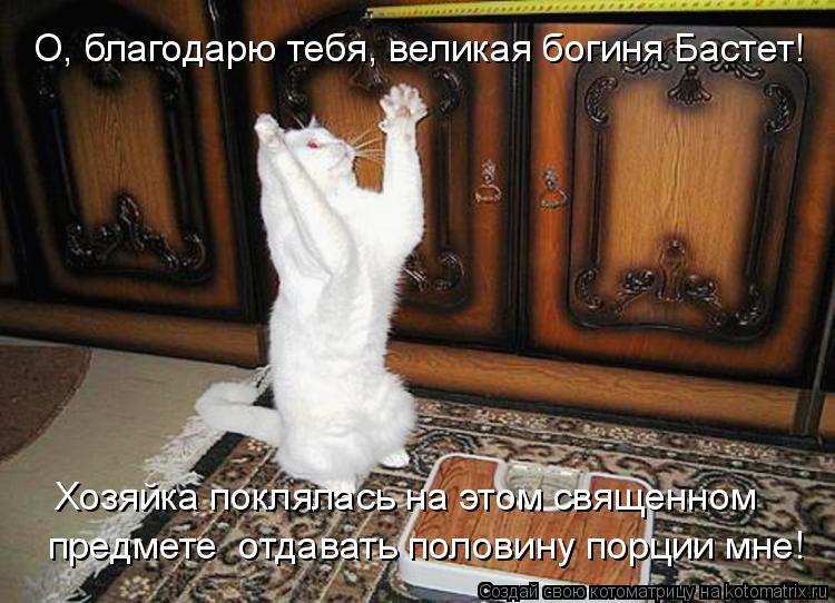 Котоматрица: О, благодарю тебя, великая богиня Бастет! Хозяйка поклялась на этом священном предмете  отдавать половину порции мне!