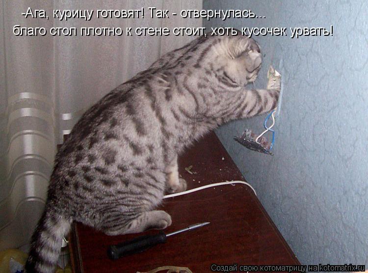 Котоматрица: -Ага, курицу готовят! Так - отвернулась...  благо стол плотно к стене стоит, хоть кусочек урвать!