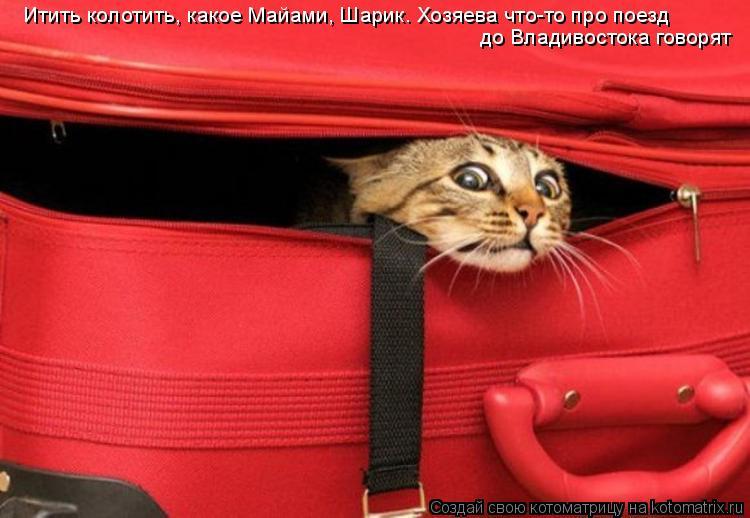 Котоматрица: Итить колотить, какое Майами, Шарик. Хозяева что-то про поезд  до Владивостока говорят
