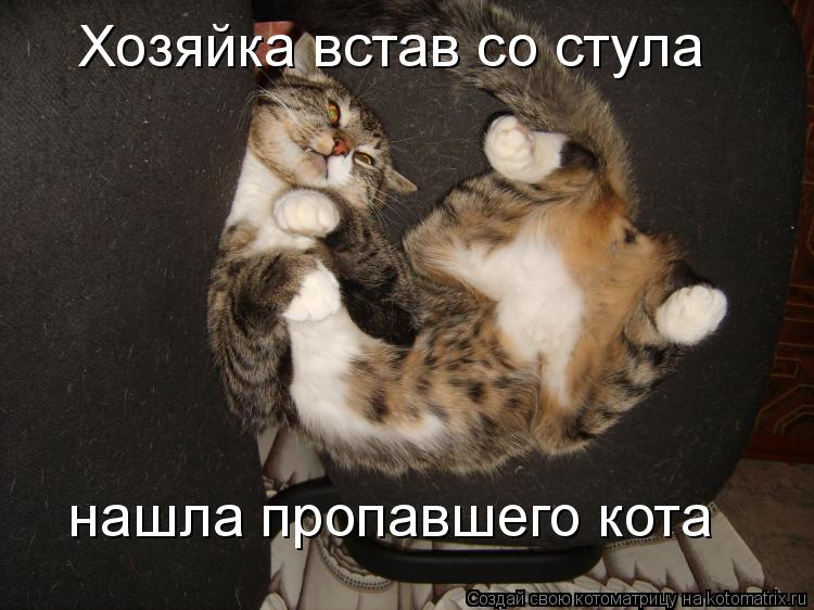 Котоматрица - Хозяйка встав со стула нашла пропавшего кота