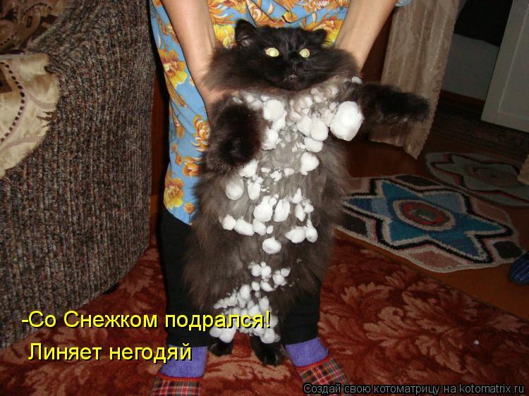 Котоматрица: -Со Снежком подрался! Линяет негодяй