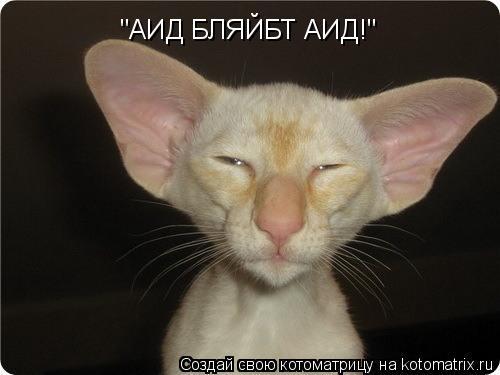 "Котоматрица: ""АИД БЛЯЙБТ АИД!"""
