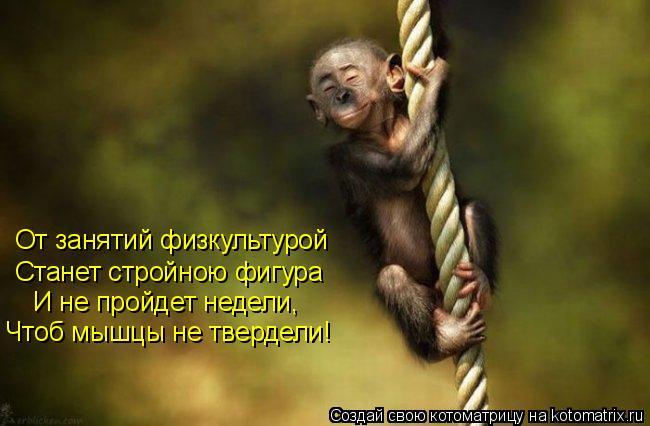 Котоматрица: От занятий физкультурой  Станет стройною фигура И не пройдет недели, Чтоб мышцы не твердели!