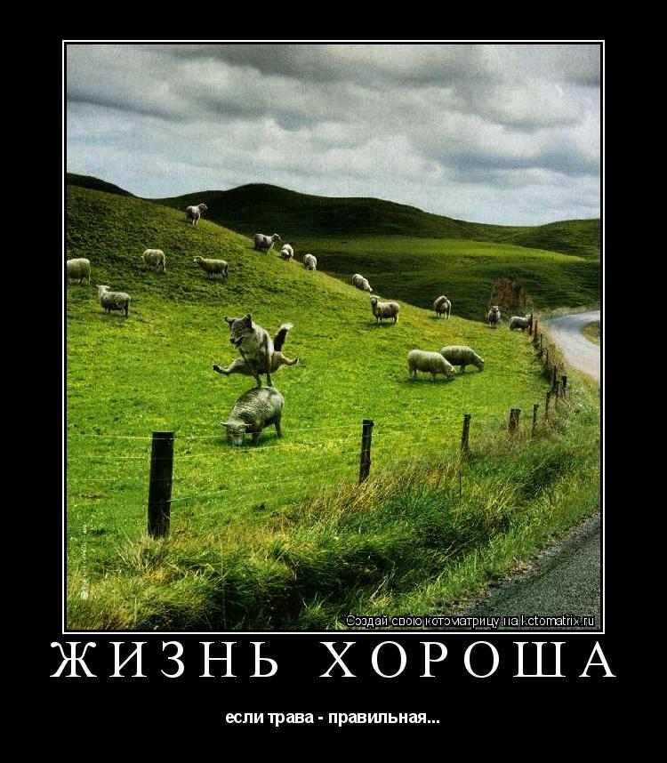 Котоматрица: Жизнь хороша если трава - правильная...