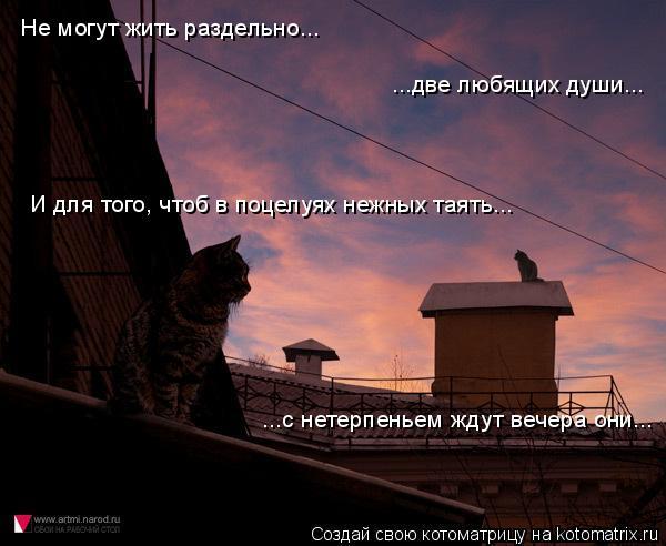 Котоматрица: Не могут жить раздельно... ...две любящих души... И для того, чтоб в поцелуях нежных таять... ...с нетерпеньем ждут вечера они...