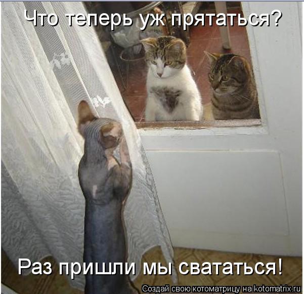 Котоматрица: Что теперь уж прятаться? Раз пришли мы свататься!