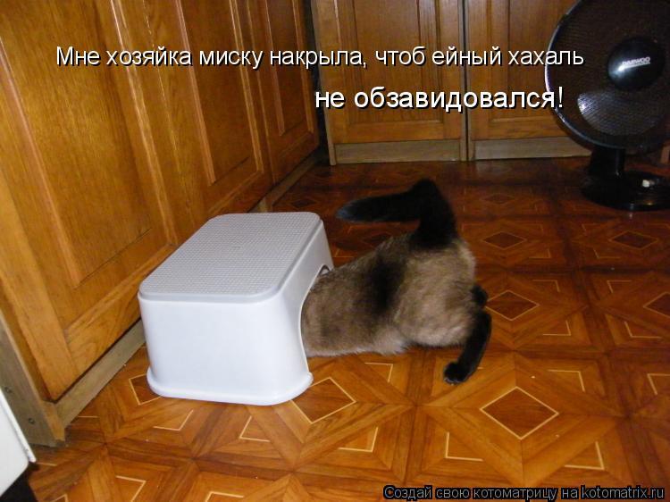 Котоматрица: Мне хозяйка миску накрыла, чтоб ейный хахаль не обзавидовался!