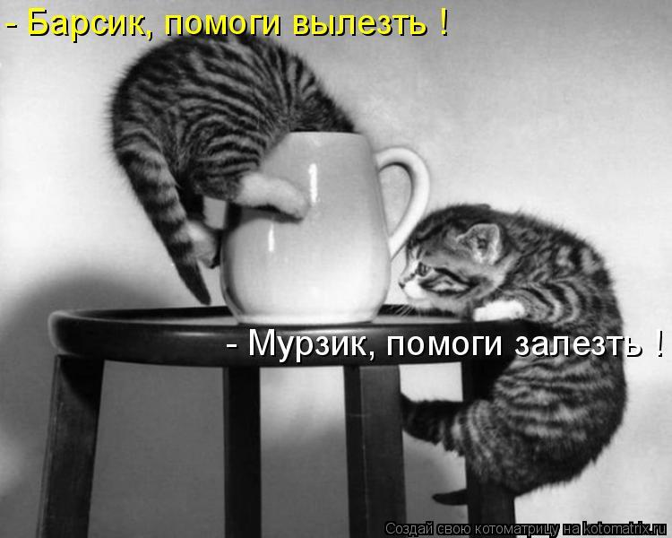 Котоматрица: - Мурзик, помоги залезть ! - Барсик, помоги вылезть !