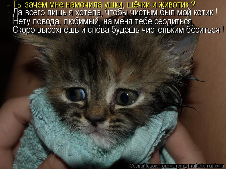 Котоматрица: - Да всего лишь я хотела, чтобы чистым был мой котик ! - Ты зачем мне намочила ушки, щёчки и животик ? Нету повода, любимый, на меня тебе сердить