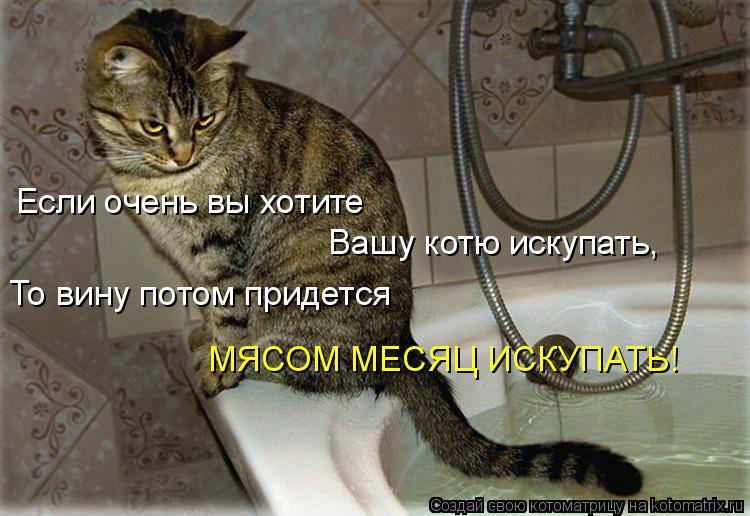 Котоматрица: Если очень вы хотите Вашу котю искупать, То вину потом придется МЯСОМ МЕСЯЦ ИСКУПАТЬ!