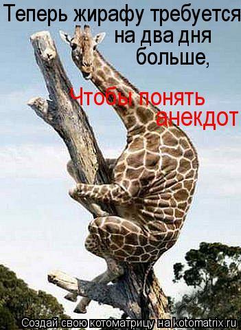 Котоматрица: Теперь жирафу требуется на два дня  больше, Чтобы понять анекдот.