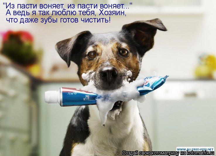 """Котоматрица: """"Из пасти воняет, из пасти воняет...""""  А ведь я так люблю тебя, Хозяин,  что даже зубы готов чистить!"""