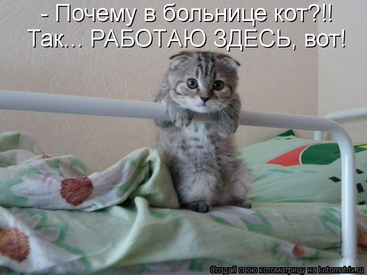 зелье котенок что такое автомобилей Екатеринбурге Кредитование