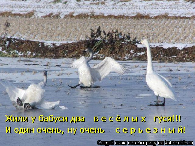 http://kotomatrix.ru/images/lolz/2011/11/30/1050889.jpg