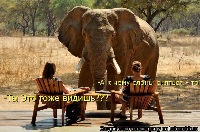 Котоматрица: -Ты Это тоже видишь??? -А к чему слоны сняться - то?