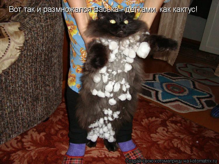 Котоматрица: Вот так и размножался Васька - детками, как кактус!