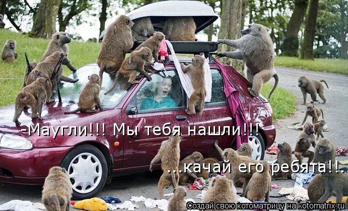 Котоматрица: -Маугли!!! Мы тебя нашли!!! ...качай его ребята!!...