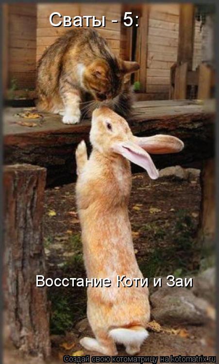 Котоматрица: Сваты - 5:  Восстание Коти и Заи