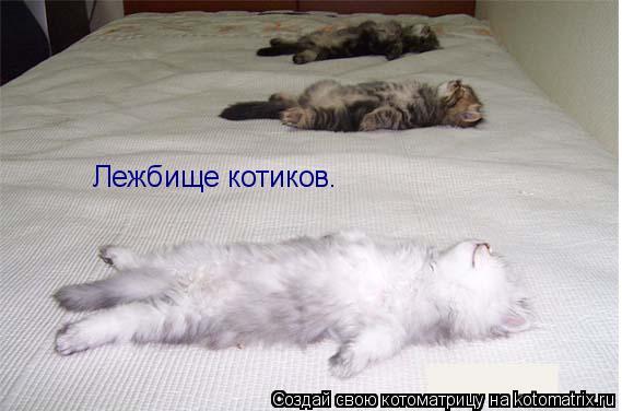 Котоматрица: Лежбище котиков.