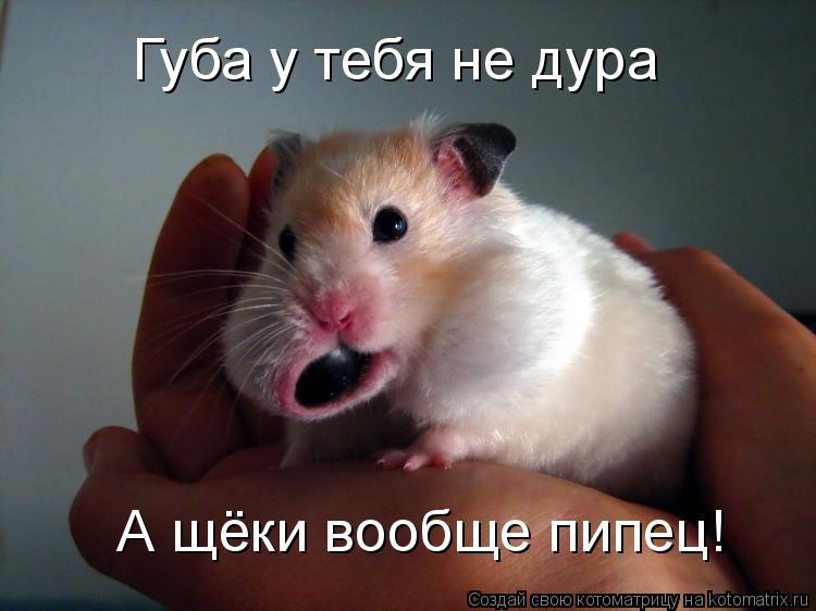 Котоматрица - Губа у тебя не дура А щёки вообще пипец!