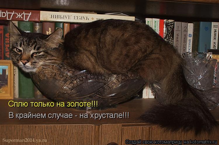 Котоматрица: Сплю только на золоте!!! В крайнем случае - на хрустале!!!