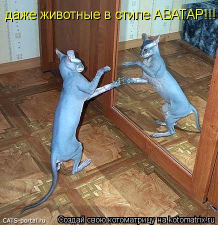 Котоматрица: даже животные в стиле АВАТАР!!!
