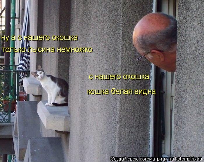Котоматрица: с нашего окошка кошка белая видна ну а с нашего окошка только лысина немножко