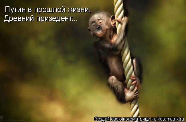 Котоматрица: Путин в прошлой жизни, Древний призедент...