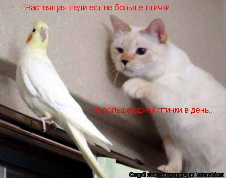 животные. прививки. кошки. вакцинации. домашние животные.