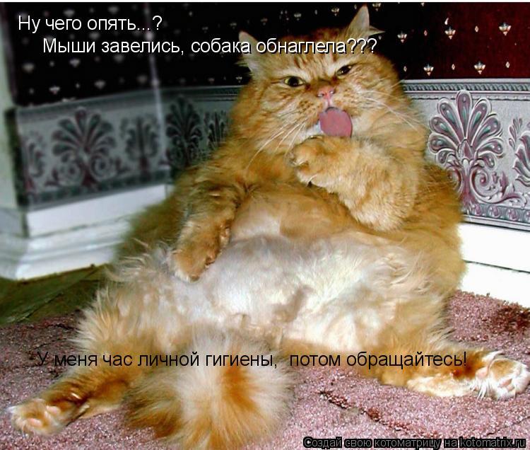 Котоматрица: Ну чего опять...? Мыши завелись, собака обнаглела??? У меня час личной гигиены,  потом обращайтесь!