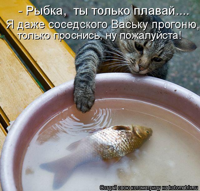 Котоматрица: - Рыбка,  ты только плавай.... Я даже соседского Ваську прогоню, только проснись, ну пожалуйста!