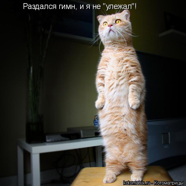 Котоматриця!)))) - Страница 9 1052024