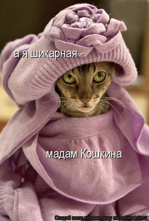 Котоматрица: мадам Кошкина а я шикарная -